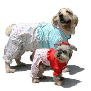 Дождевик Глория для собак купить.