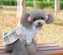 Платье для собак Биатриз