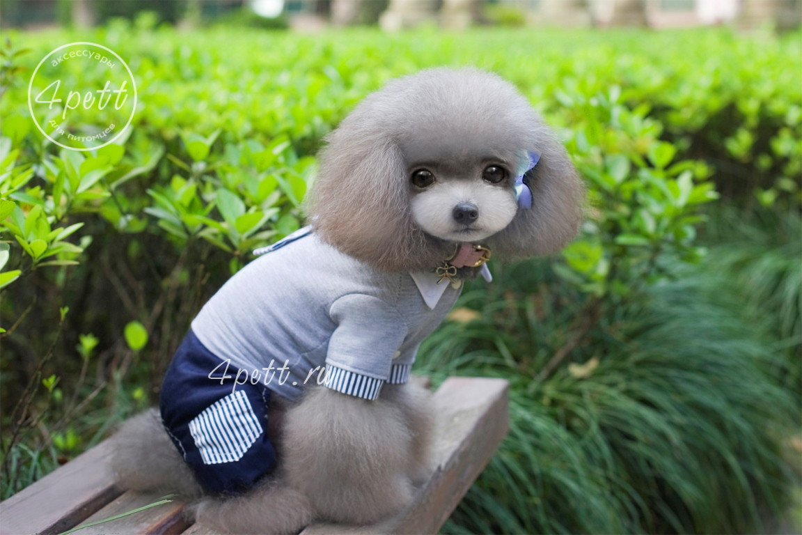 Костюм Бертал для собак.