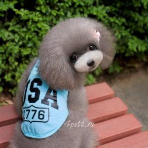 Футболка, майка USA голубая для собак.
