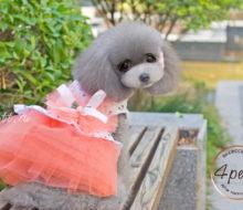 Платье Карамель для собак